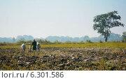 Купить «Фермер вспахивает землю», видеоролик № 6301586, снято 29 апреля 2014 г. (c) pzAxe / Фотобанк Лори