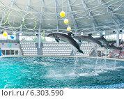 Дельфинарий г. Евпатория (2014 год). Редакционное фото, фотограф Сергей Погодин / Фотобанк Лори