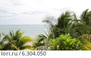 Купить «Tropical beach with palm trees», видеоролик № 6304050, снято 30 июля 2014 г. (c) Syda Productions / Фотобанк Лори