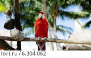 Купить «Close up of red parrot sitting on perch», видеоролик № 6304062, снято 30 июля 2014 г. (c) Syda Productions / Фотобанк Лори