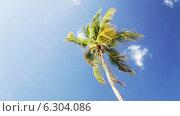 Купить «Palm tree over blue sky with white clouds», видеоролик № 6304086, снято 30 июля 2014 г. (c) Syda Productions / Фотобанк Лори