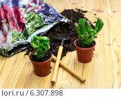 Купить «Пересадка растений», фото № 6307898, снято 24 июня 2014 г. (c) Татьяна Ляпи / Фотобанк Лори