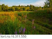 Просёлочная дорога, деревня Княгинино. Стоковое фото, фотограф Александр Маркин / Фотобанк Лори