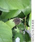 Гусеницы. Стоковое фото, фотограф Виталий Полухин / Фотобанк Лори