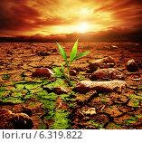 Купить «Green plant growing trough dead soil», фото № 6319822, снято 17 августа 2014 г. (c) Andrejs Pidjass / Фотобанк Лори
