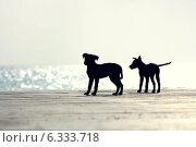 Силуэты двух щенков на берегу моря. Стоковое фото, фотограф Александр Пшеничный / Фотобанк Лори