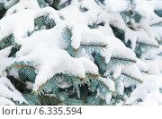 Купить «Ветви ели, покрытые снегом», фото № 6335594, снято 18 января 2014 г. (c) Екатерина Овсянникова / Фотобанк Лори