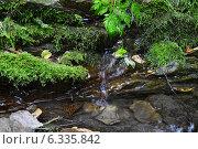 Горный ручей. Стоковое фото, фотограф Шевердина Мария / Фотобанк Лори