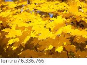 Купить «Желтые листья», фото № 6336766, снято 13 октября 2013 г. (c) Владимир Сурков / Фотобанк Лори
