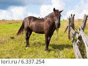 Купить «Гнедой конь на пастбище», фото № 6337254, снято 18 августа 2014 г. (c) Николай Мухорин / Фотобанк Лори