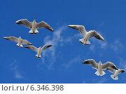 Купить «Чайки в полёте», фото № 6346398, снято 21 января 2014 г. (c) Сергей Трофименко / Фотобанк Лори