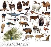 Set of Indian Peafowl and other asian animals. Стоковое фото, фотограф Яков Филимонов / Фотобанк Лори
