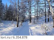 Дорога в зимнем лесу. Стоковое фото, фотограф BoLinar / Фотобанк Лори
