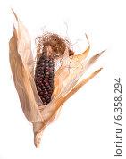 Купить «Початок цветной кукурузы на белом фоне», фото № 6358294, снято 31 августа 2014 г. (c) V.Ivantsov / Фотобанк Лори