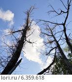 Старый лес. Стоковое фото, фотограф Владимир Алексеевич / Фотобанк Лори