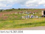 Купить «Ульи на пасеке», фото № 6361834, снято 5 июля 2013 г. (c) Евгений Ткачёв / Фотобанк Лори