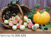 Рассыпавшиеся из корзины яблоки и оранжевая тыква на деревянном фоне. Стоковое фото, фотограф Олейникова Галина / Фотобанк Лори