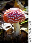 Купить «Гриб Мухомор в осеннем лесу», фото № 6371650, снято 6 октября 2013 г. (c) ElenArt / Фотобанк Лори