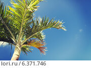 Купить «palm tree over blue sky with white clouds», фото № 6371746, снято 12 февраля 2014 г. (c) Syda Productions / Фотобанк Лори