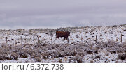 Купить «Bull in a snow covered field, Grand Staircase-Escalante National Monument, Utah, USA», фото № 6372738, снято 16 декабря 2018 г. (c) Ingram Publishing / Фотобанк Лори