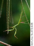 Купить «A artistic shot of a praying mantis», фото № 6373634, снято 11 ноября 2019 г. (c) Ingram Publishing / Фотобанк Лори