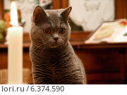 Купить «Cat», фото № 6374590, снято 7 апреля 2020 г. (c) Ingram Publishing / Фотобанк Лори