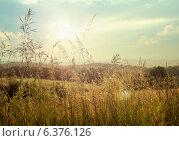 Купить «Photo of large fields with corn», фото № 6376126, снято 23 мая 2019 г. (c) Ingram Publishing / Фотобанк Лори