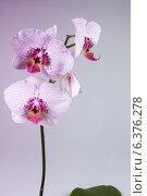 Цветок орхидеи. Стоковое фото, фотограф Анна Дорофеенко / Фотобанк Лори