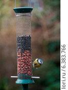 Купить «A blue tit on a bird feeder», фото № 6383766, снято 20 августа 2019 г. (c) Ingram Publishing / Фотобанк Лори