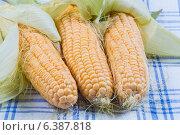 Кукуруза. Стоковое фото, фотограф Анна Дорофеенко / Фотобанк Лори