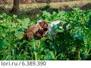 In the Countryside. Стоковое фото, агентство Ingram Publishing / Фотобанк Лори