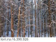 Зимний лес. Стоковое фото, фотограф Анна Бондарева / Фотобанк Лори