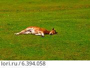 Молодой жеребенок лежит на зеленой траве. Стоковое фото, фотограф Владимир Николаевич Гневушев / Фотобанк Лори