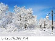 Купить «Зимняя природа, пейзажи с деревьями в парке», фото № 6398714, снято 7 февраля 2013 г. (c) ElenArt / Фотобанк Лори