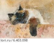 Купить «Акварельный портрет кота породы колор-пойнт», иллюстрация № 6403098 (c) Julia Shepeleva / Фотобанк Лори