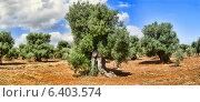 Купить «Оливковые деревья», фото № 6403574, снято 1 июля 2014 г. (c) Андрей Рыбачук / Фотобанк Лори