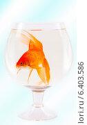 Одна золотая рыбка в бокале. Стоковое фото, фотограф Анна Дорофеенко / Фотобанк Лори