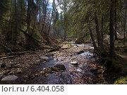 Лесная река. Стоковое фото, фотограф Антон Каменский / Фотобанк Лори
