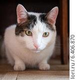 Кот под стулом. Стоковое фото, фотограф Alexnios / Фотобанк Лори