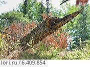 Купить «Fallen tree in a forest, Unorganized Kenora, Kenora, Lake of The Woods, Ontario, Canada», фото № 6409854, снято 2 августа 2012 г. (c) Ingram Publishing / Фотобанк Лори