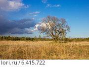 Дерево в поле. Стоковое фото, фотограф Антон Каменский / Фотобанк Лори