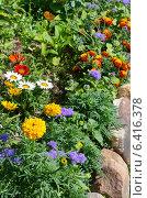 Купить «Цветочная клумба из однолетников», эксклюзивное фото № 6416378, снято 19 июля 2014 г. (c) Елена Коромыслова / Фотобанк Лори