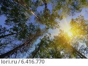 Кроны деревьев на фоне неба в лучах солнца. Стоковое фото, фотограф Анфимов Леонид / Фотобанк Лори