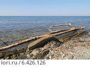 Купить «Морской каменистый берег, сухое дерево вдоль берега», фото № 6426126, снято 23 августа 2014 г. (c) Емельянов Валерий / Фотобанк Лори