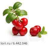 Купить «Лесная ягода брусника», фото № 6442046, снято 16 августа 2014 г. (c) Валентина Разумова / Фотобанк Лори