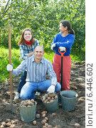 Купить «Happy family harvesting potatoes», фото № 6446602, снято 12 сентября 2012 г. (c) Яков Филимонов / Фотобанк Лори