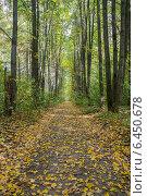 Липовая аллея в сентябре. Стоковое фото, фотограф Аркадий Рыпин / Фотобанк Лори