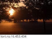 Утреннее солнце. Стоковое фото, фотограф Александра Стельмахова / Фотобанк Лори