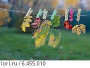 Купить «Осень», фото № 6455010, снято 12 октября 2013 г. (c) Шумилов Владимир / Фотобанк Лори