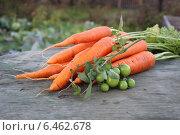 Морковь с зелеными помидорами на ветке. Стоковое фото, фотограф Иван Корчагин / Фотобанк Лори